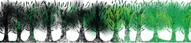 florestas_58