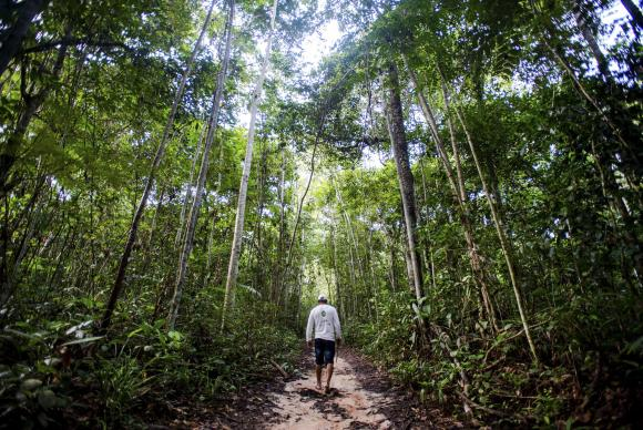 floresta-211016ebc0597