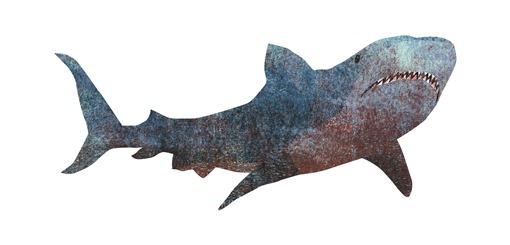 shark_05(2)