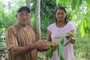 Os indígenas Rafael e Gertrudes Rikbaktsa destacam importância da floresta e das plantas medicinais (Crédito Luna Gámez)