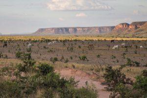 Área de chapada no Cerrado - Piauí (Rosilene Miliotti/FASE)