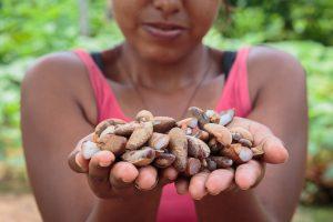 Povos do Cerrado: quebradeiras de coco babaçu (Thomas Bauer)