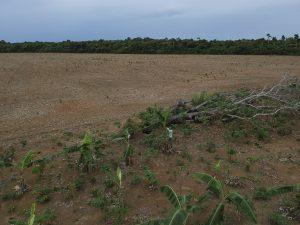 Área de roça cercada por plantação de soja