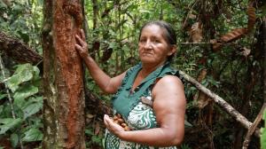 Edite Borari ao lado de uma árvore de andiroba, cujas sementes produzem o óleo medicinal. O processo de extração do óleo dura mais de 30 dias (Fábio Alkmin)