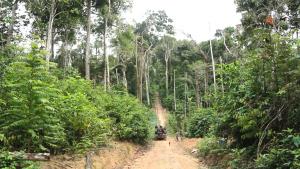 Floresta no Território Maró (Fábio Alkmin)