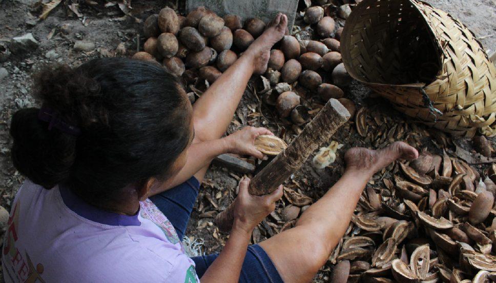 Quebradeiras de coco babaçu da região do Bico do Papagaio, em Tocantins (Bruno Santiago/Acervo APA-TO)
