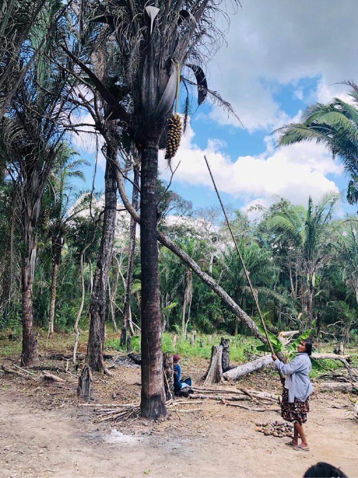 Oscar Vargas/CIPCA (Indígenas Chiquitanas quebradeiras de coco-babaçu - Santa Cruz, Bolívia)
