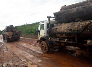 Caminhões são vistos com frequencia saindo da área da Fazenda Araúna carregandos de madeira ilegal (CPT/MT)