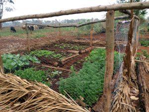 Horta cultivada no Acampamento Boa Esperança (CPT/MT)