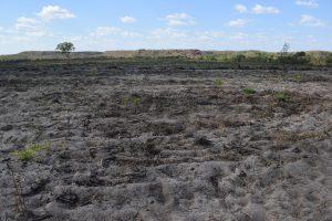 Desmatamento dentro do Território Quilombola Barra da Aroeira_Crédito_ Comunidades Quilombolas (Acervo APATO)